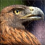 A Closeup photograph of a Golden Eagle in profile