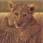 A Lion Cub on the Serengeti.