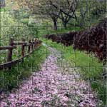 A beautiful path in the forest covered by cherry blossoms petals.