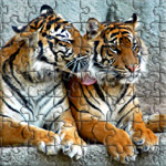 Two Bengle Tiger sisters enjoying their life at Seattle ZOO, Washington USA.